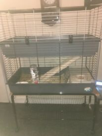 Guinea pigs and double cage