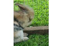 Beautiful bunnies for sale