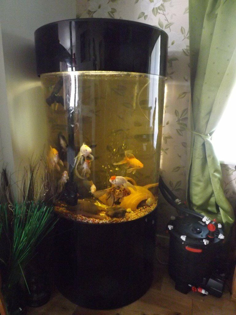 LARGE COLUMN FISH TANK FOR SALE | in Newton Aycliffe ...