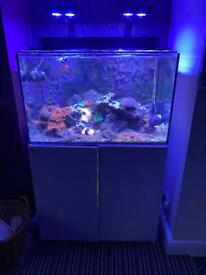 Red Sea 260 reefer Marine Tank with Sump upgrade