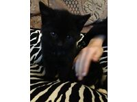 Black girl kitten