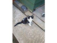 lovely female kittens for sale