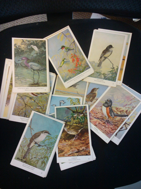 Complete set of 50 art cards of Birds of East North Am