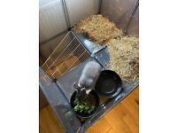 Brand new rabbit indoor house