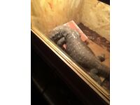 Bosc monitor for sale