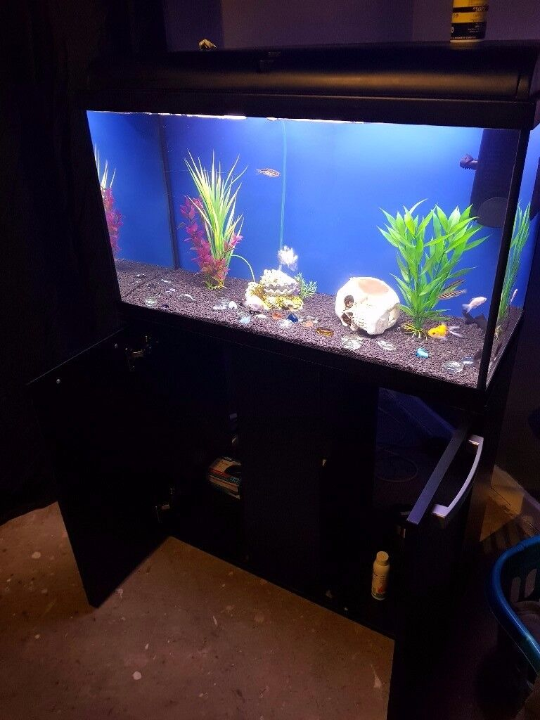 Gold fish tank and stand come with fish full set up