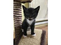 Kittens - SOLD