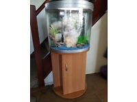 fish tank 60ltr half moon