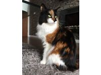 Almost 2 year old Female Cat needs a new home