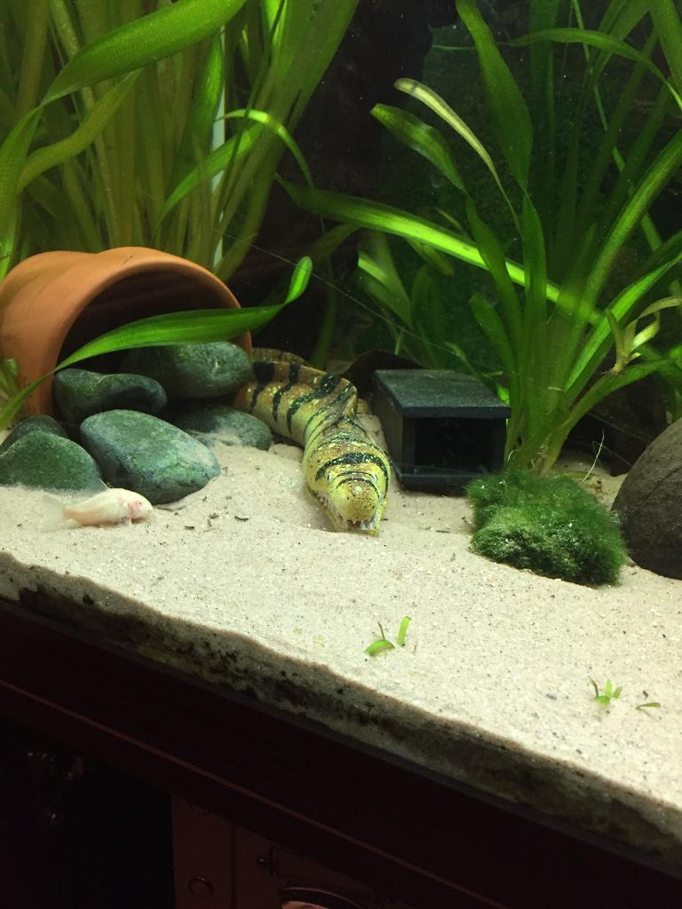 Aquarium Fish Tank Ornament Bubbler Snake Eel With Hose Unique