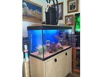 Fluval roma 200 aquarium and cabinet for sale