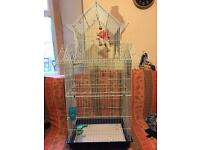Pigeon cage £20