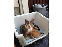 FREE TO TAKE CAT AND KITTEN READY TO GO
