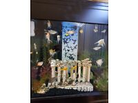 Aqua 1 fish tank and sump