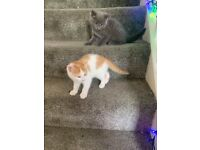 MIXED BREED BEAUTIFUL KITTENS LOOKING FOR A LOVING HOME