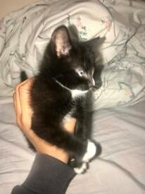Cute black and white kitten for sale