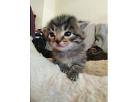 Beautiful kittens looking for new home