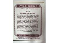 Framed bird cigarette or tea cards