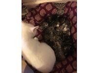 Only 3 kittens left!