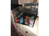 Beta fish tank (for fighting fish)🐠