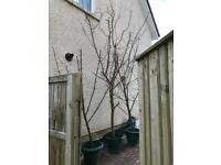 4 mature fruit trees