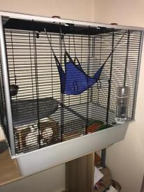 2 x Fancy Rats LOOKING FOR FOREVER HOME