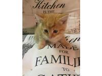 Kitten has been sold