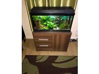 Juwel fish tank full set ups