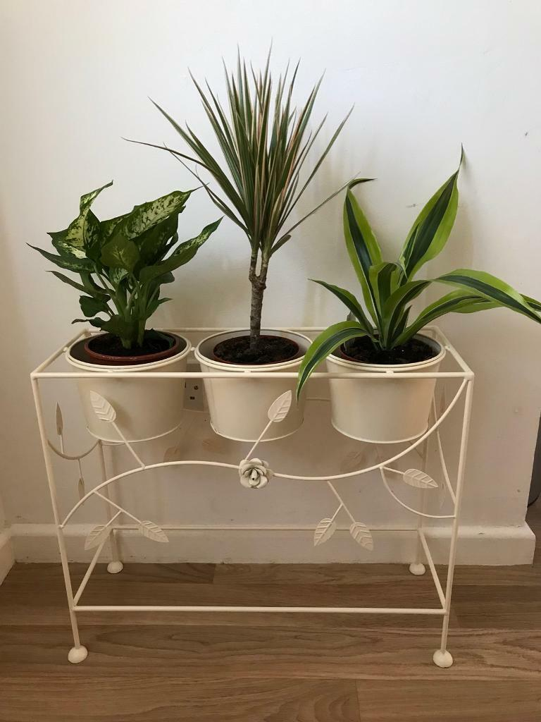 SHABBY CHIC PLANT STAND INCL PLANTS