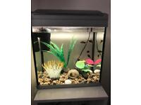 Fish & tank for sale ONO