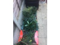 70 POTTED GARDEN PLANTS