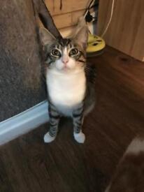 11 month kitten
