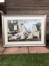 White tiger picture in a frame