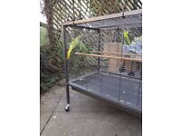 GENUINE - Indian Ringneck Parrots For Sale- .QUICK SALE!! BEST QUALITY+ EXTRA LARGE CAGE.