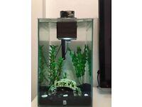Fluval chi 25L fish tank