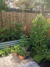 Organic Gardener - General Maintenance and development, Planting, Weeding, Kitchen gardens