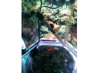 Hexagon fish tank
