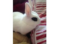 8 month old white female rabbit wit her cage and everything