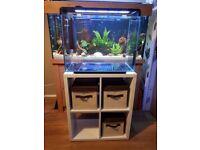 Superfish Home 80 fish tabk