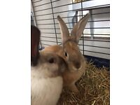 Two rabbits male & female 9mth old