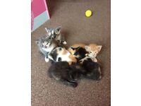 Beautiful family kittens