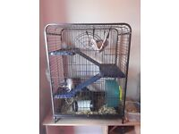 4 rats for sale with cage