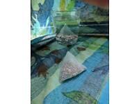 100 pcs mineralising tea bags
