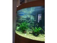 190l Juwel corner fish tank