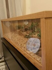 Snake + big terrarium