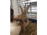 Rabbits female & also male