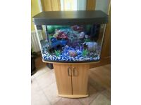 2ft Fish tank and oak stand (full tropical set up)