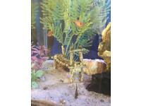 Tropical Fish tank 130L + extras, inc fish