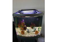 Fish tank plus stand