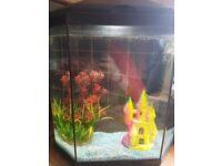 Fish Tank - Full set up